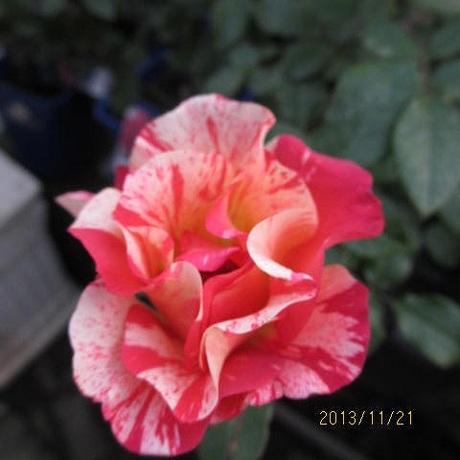 s-IMG_3324.jpg