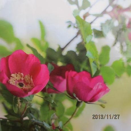 s-IMG_3432.jpg